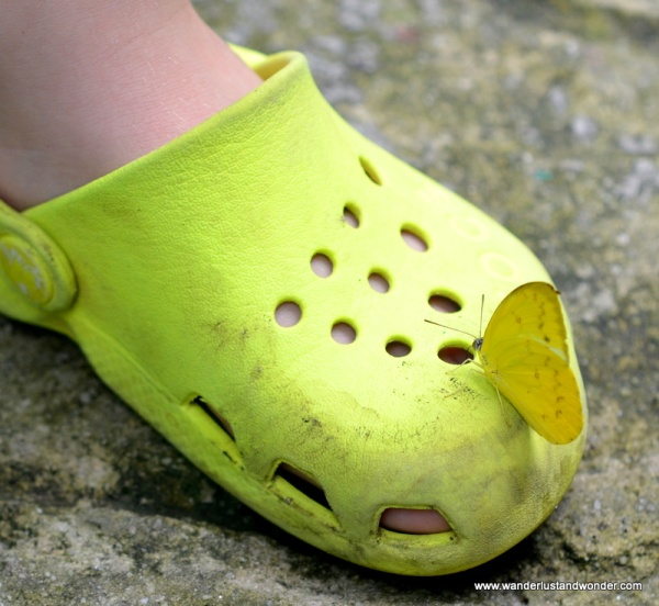 These little yellow butterflies are highly attracted to little yellow Crocs.