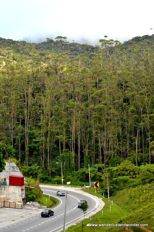 The Cameron Highlands, Malaysia