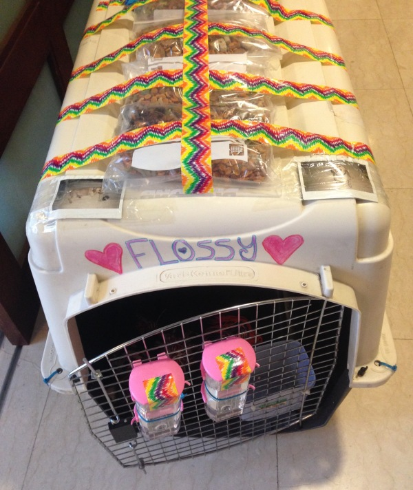 Flossy's travel crate.